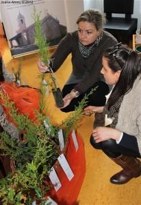 montalegre-biblioteca-municipal-assinala-dia-da-arvore-2012-3